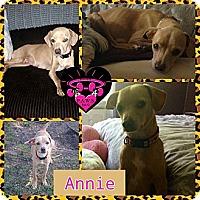Adopt A Pet :: Annie - Fowler, CA