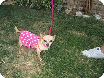 Chihuahua Mix Dog for adoption in Palm Springs, California - Doggie aka Naomi