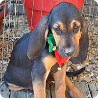 Adopt A Pet :: Trader Joe - Dallas, TX