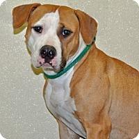 Adopt A Pet :: China - Port Washington, NY