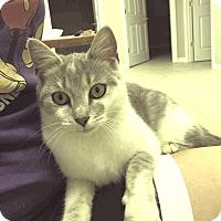 Adopt A Pet :: PRISCILLA - Whitestone, NY