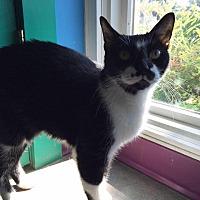 Adopt A Pet :: Norbert - Topeka, KS