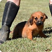 Adopt A Pet :: Finch - South Dennis, MA