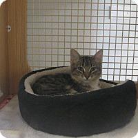 Adopt A Pet :: MIA - Brea, CA