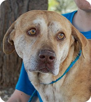 Mixed Breed (Medium) Mix Dog for adoption in Las Vegas, Nevada - Koufax