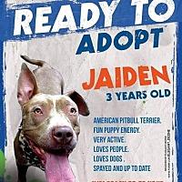 Pit Bull Terrier Dog for adoption in Dartmouth, Massachusetts - Jaiden