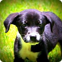 Adopt A Pet :: Erica - Glastonbury, CT
