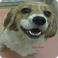 Adopt A Pet :: Hunter - Warren, PA