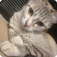 Adopt A Pet :: Cassidy - Tucson, AZ