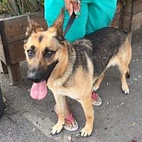 Adopt A Pet :: Samantha - San Diego, CA