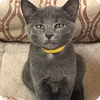 Adopt A Pet :: Kai - Encinitas, CA