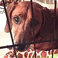 Adopt A Pet :: AJ Hinch - Houston, TX