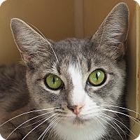 Adopt A Pet :: Sally - Danville, KY