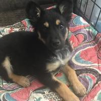 Adopt A Pet :: Steve - Athabasca, AB