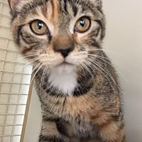 Adopt A Pet :: Peppermint Patty - Meridian, ID