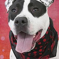 Adopt A Pet :: Kylo - Cincinnati, OH