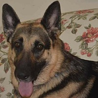 Adopt A Pet :: Edie - Clemmons, NC