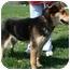 Photo 1 - Shepherd (Unknown Type) Mix Dog for adoption in Osseo, Minnesota - Gretchen