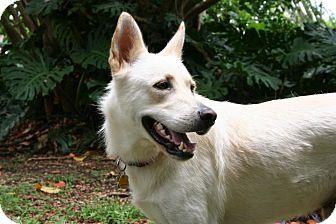 German Shepherd Dog Mix Dog for adoption in Homestead, Florida - Casper