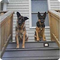 Adopt A Pet :: COURTESY POST - Wakefield, RI