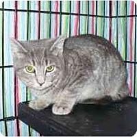 Adopt A Pet :: Starlight - Colmar, PA