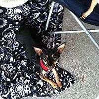 Adopt A Pet :: Lassie - North Hollywood, CA