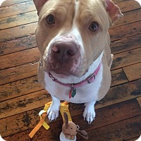 Adopt A Pet :: Luka - Elderton, PA