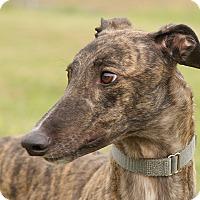 Adopt A Pet :: Quincy - Portland, OR