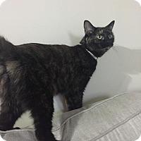 Adopt A Pet :: Nikki - Brownsburg, IN