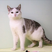 Adopt A Pet :: Wheatley - Murphysboro, IL