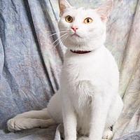 Adopt A Pet :: PRECIOUS - Anna, IL