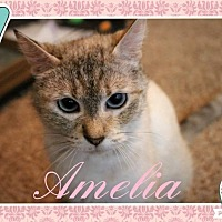 Adopt A Pet :: Amelia - Wichita, KS