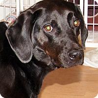 Adopt A Pet :: Brandi - Marion, NC