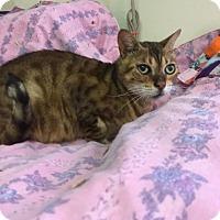 Adopt A Pet :: Asia - Temecula, CA