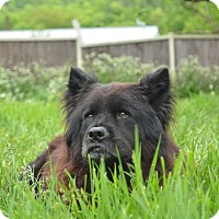 Adopt A Pet :: Frankie - East Randolph, VT