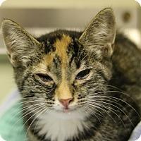 Adopt A Pet :: 35806623 - Cedartown, GA