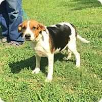 Adopt A Pet :: Sissy - Scranton, PA