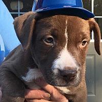 Adopt A Pet :: Xander - Waterbury, CT