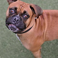 Adopt A Pet :: Rex - San Francisco, CA