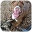 Photo 4 - Labrador Retriever/Pointer Mix Dog for adoption in Berkeley, California - Spence
