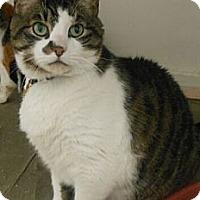 Adopt A Pet :: Zeus - Reston, VA