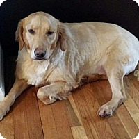 Adopt A Pet :: Molly - New Canaan, CT