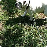 Adopt A Pet :: Buster - Winder, GA
