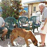 Adopt A Pet :: Gomer, FL - Miami Beach, FL