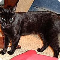 Adopt A Pet :: Picassa - Riverside, RI