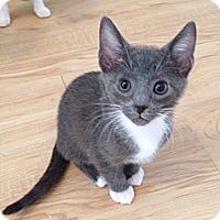 Adopt A Pet :: Liam - Monroe, NC