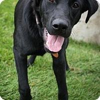 Adopt A Pet :: Torreys - Broomfield, CO
