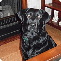 Adopt A Pet :: Allie - Lewisville, IN