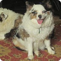 Adopt A Pet :: Possie - Clayton, OH