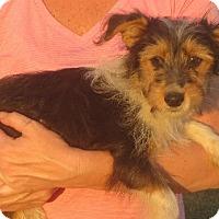 Adopt A Pet :: Rose - Greenville, RI